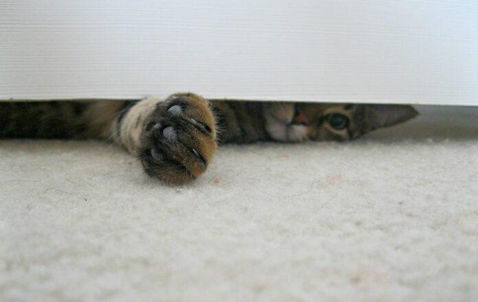 gatto con zampa sotto la porta