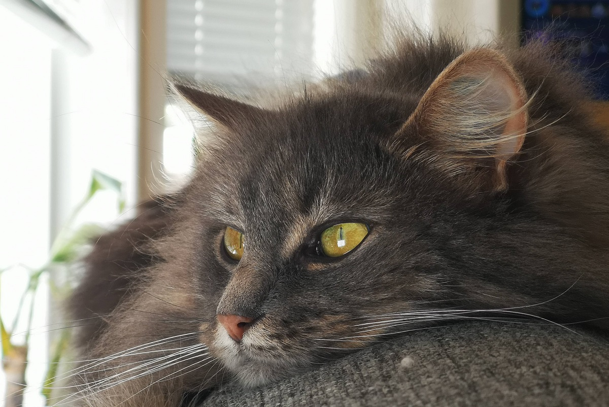 gatto disteso su poltrona