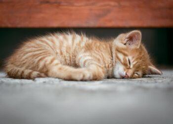 gattino dorme per terra