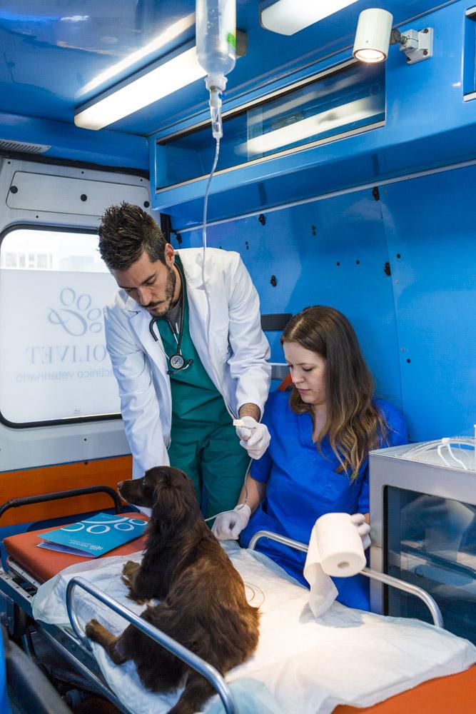 medici visita animale