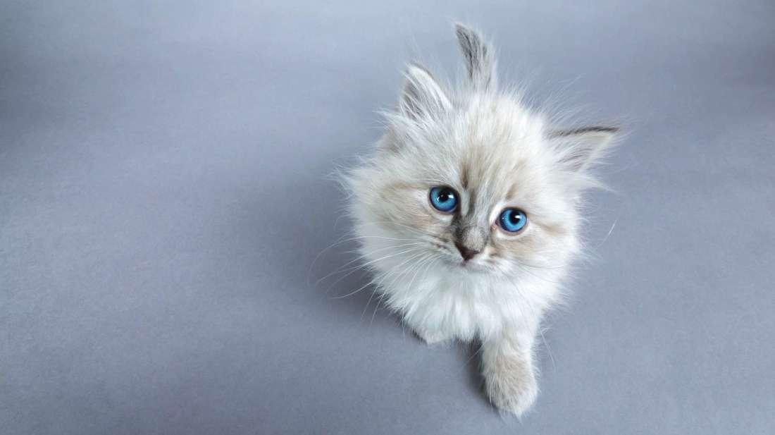gattino-fissa