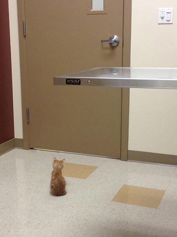 gattino-aspetta
