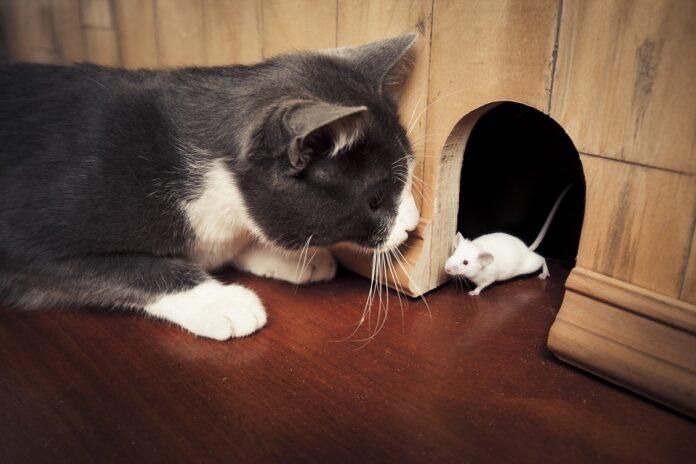 gatto davanti a tana di un topo
