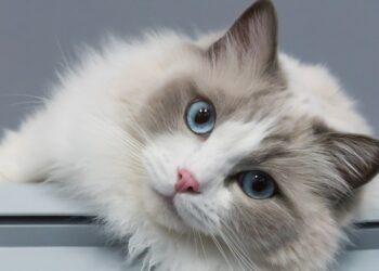 Il Gatto E Le Posizioni In Cui Dorme Il Mio Gatto è Leggenda
