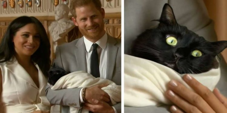 royal-baby-Archie-è-il-nome-del-gatto-di-meghan