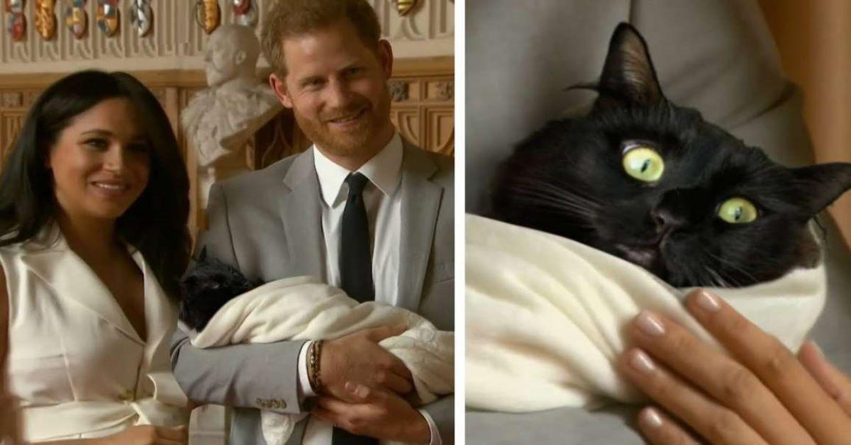 Risultati immagini per meghan gatto