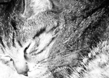 gatto-in-bianco-e-nero