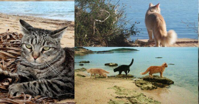 gatti-al-mare