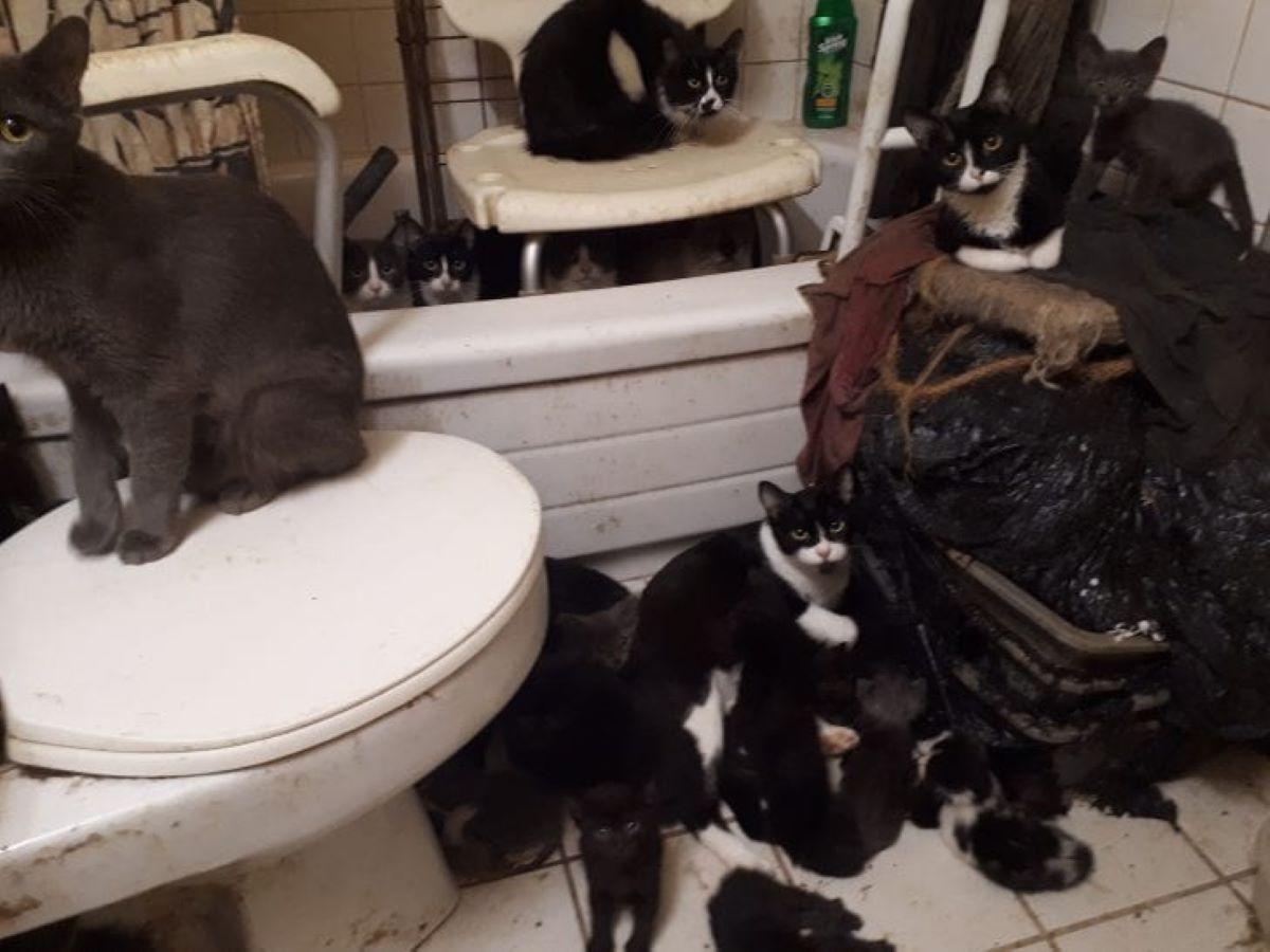 gatti-in-bagno