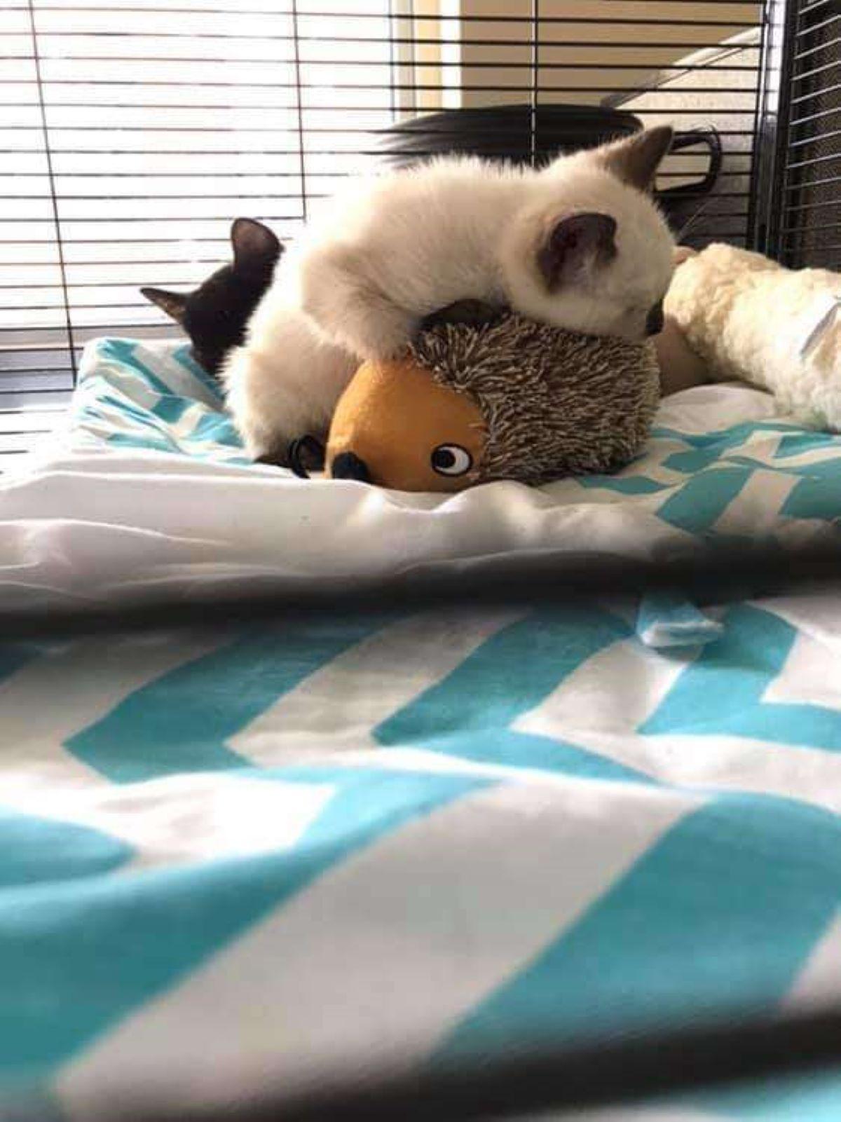 gattino-che-gioca
