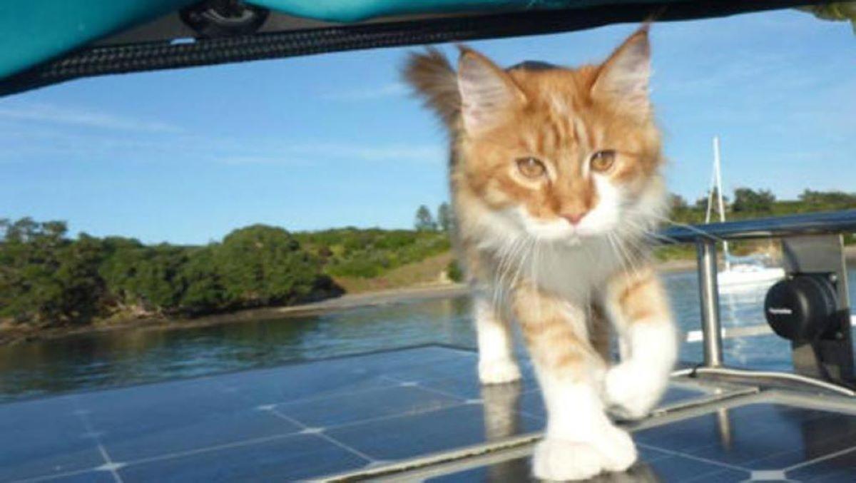 gatto-in-barca