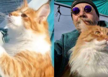 gatto-con-proprietario-su-barca