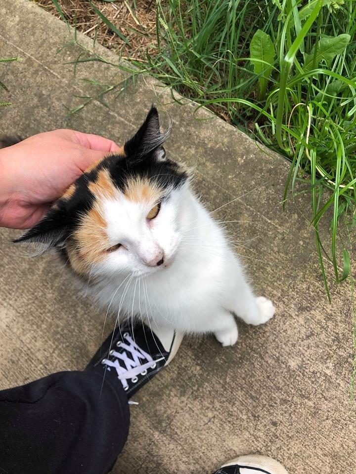 gatto-randagio-si-fa-accarezzare
