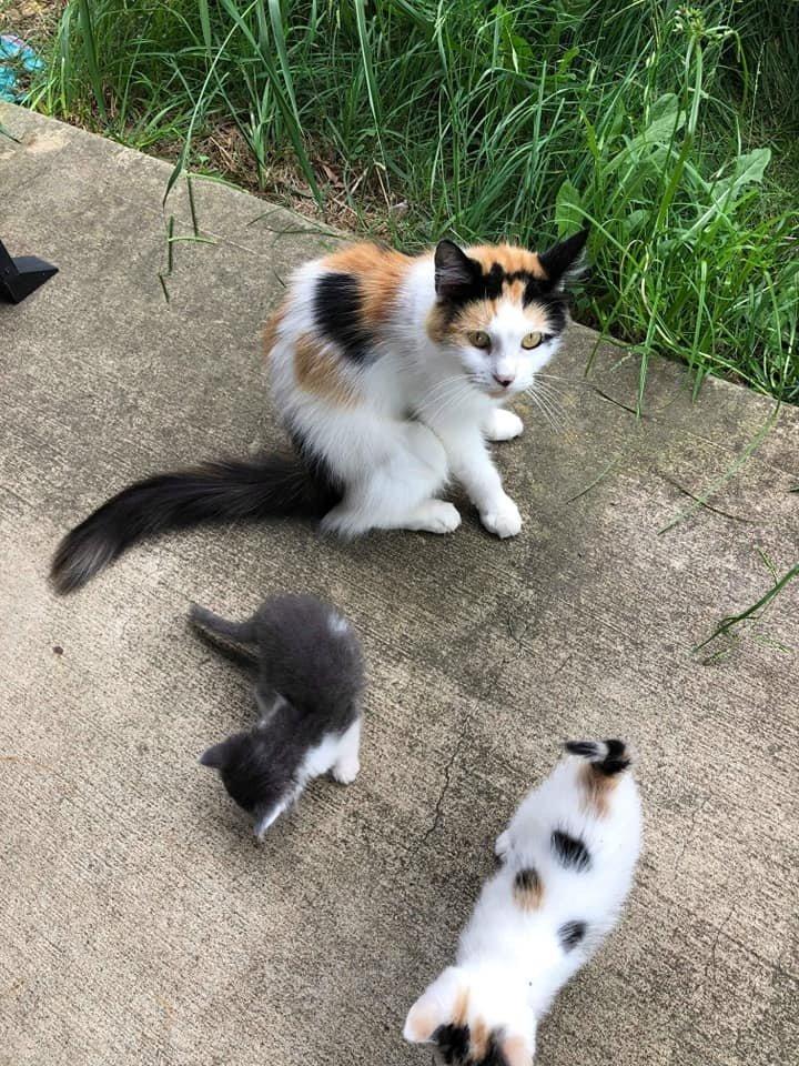 mamma-gatta-e-due-gattini