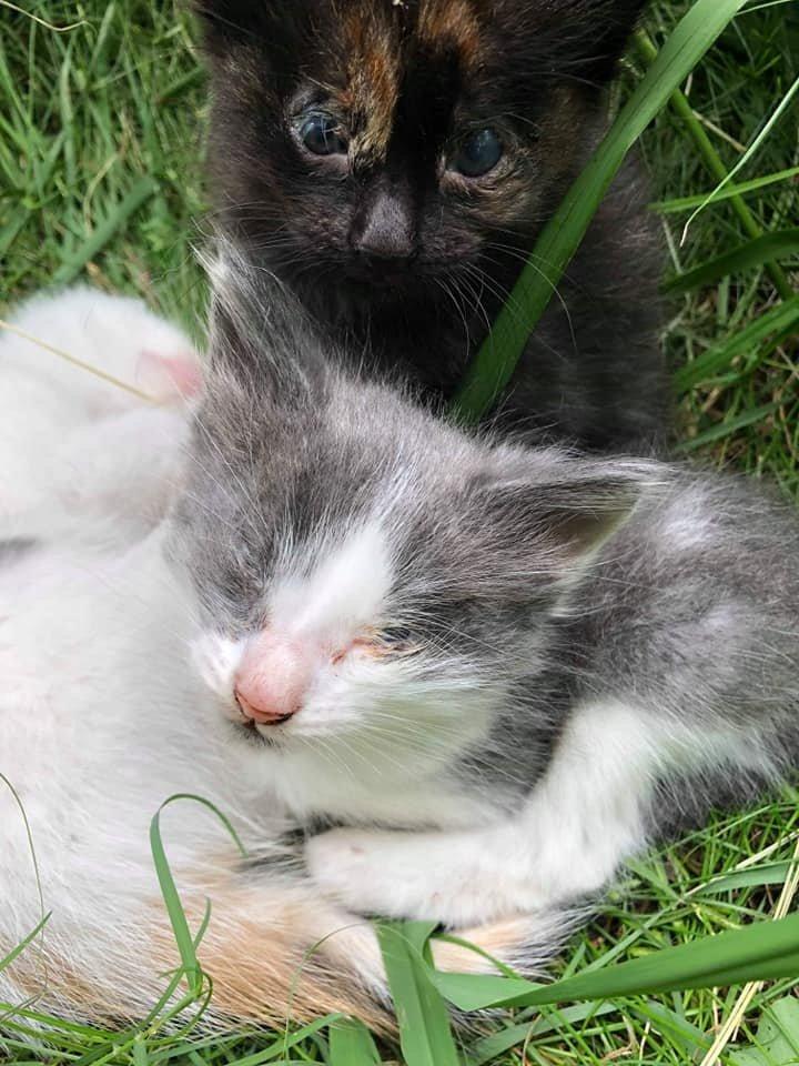 gattini-malati