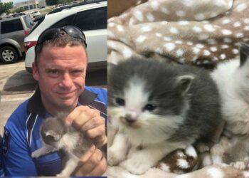 gattini-e-agenti-di-polizia