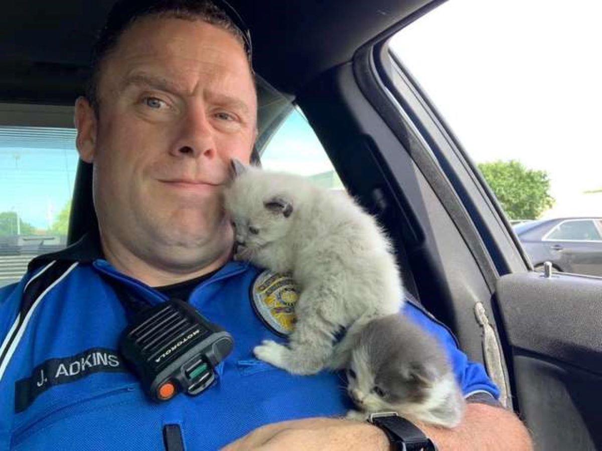 gattini-in-macchina-polizia