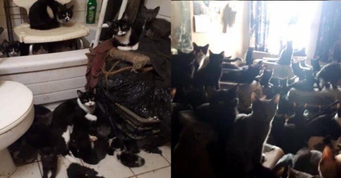 centinaia-di-gatti