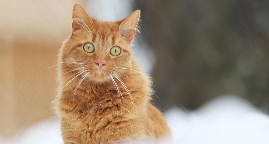 gatto con occhi sbarrati