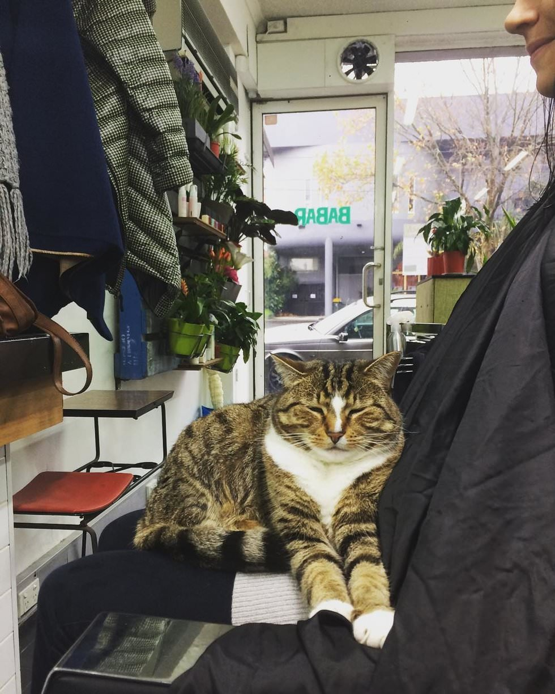 gatto-rilassa-clienti