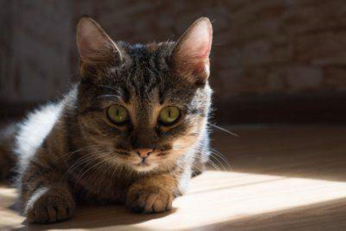gatto-che-fissa
