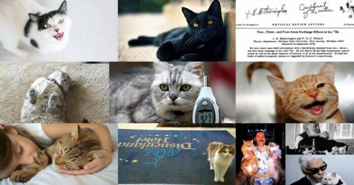 gatti-diversi