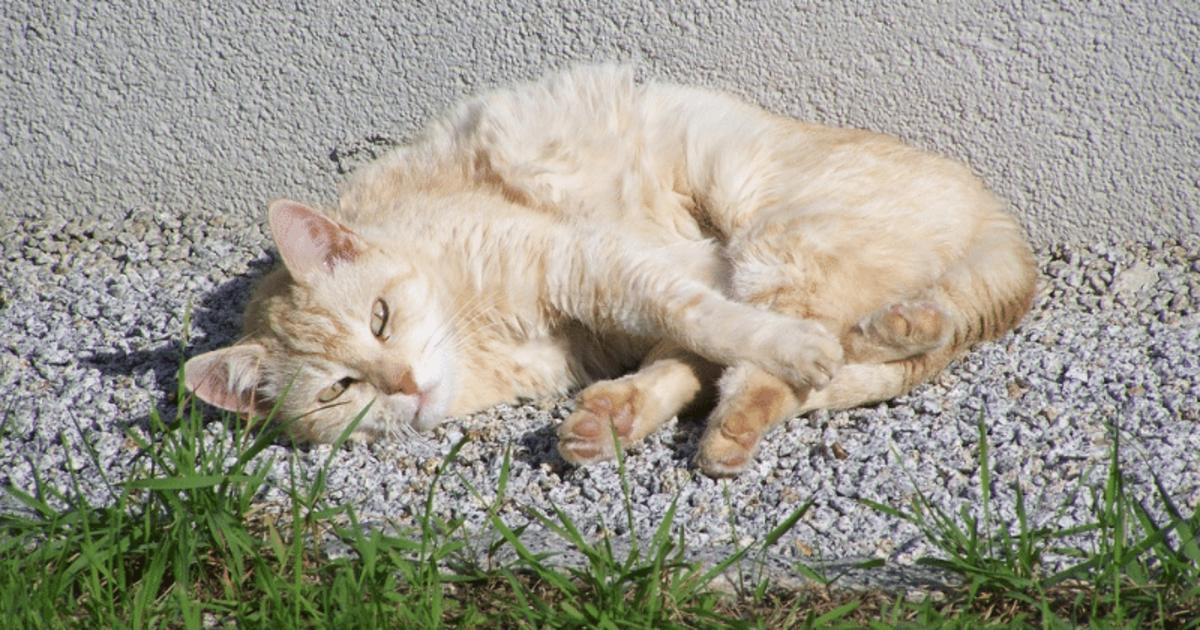 Vitamine per gatti debilitati