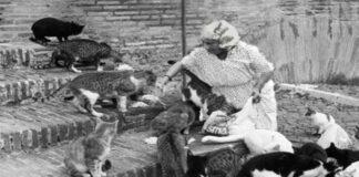 gattara-con-gatti