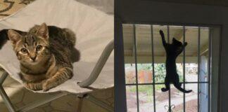 gatto-su-sedia-e-finestra