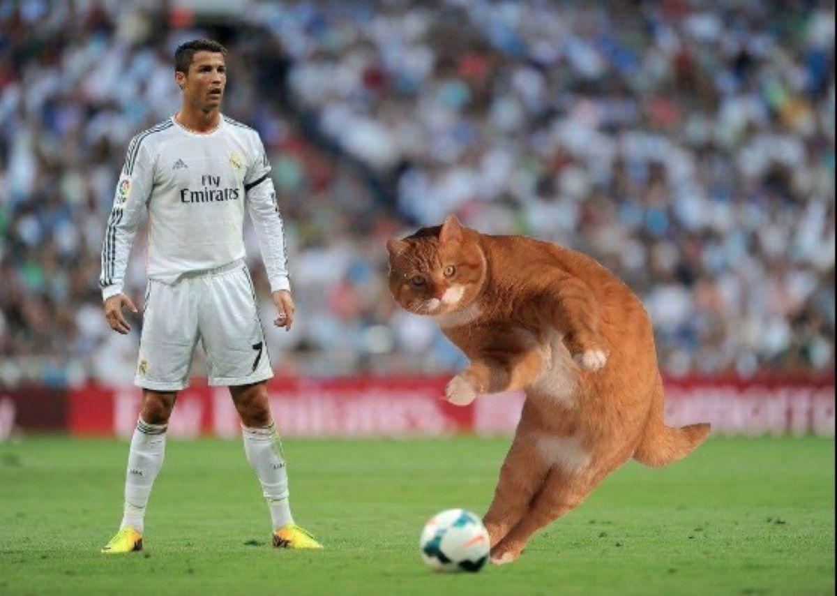 gatto-con-cristiano-ronaldo