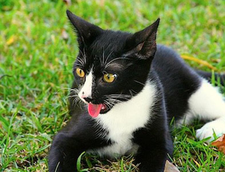 Colpo di calore nel gatto