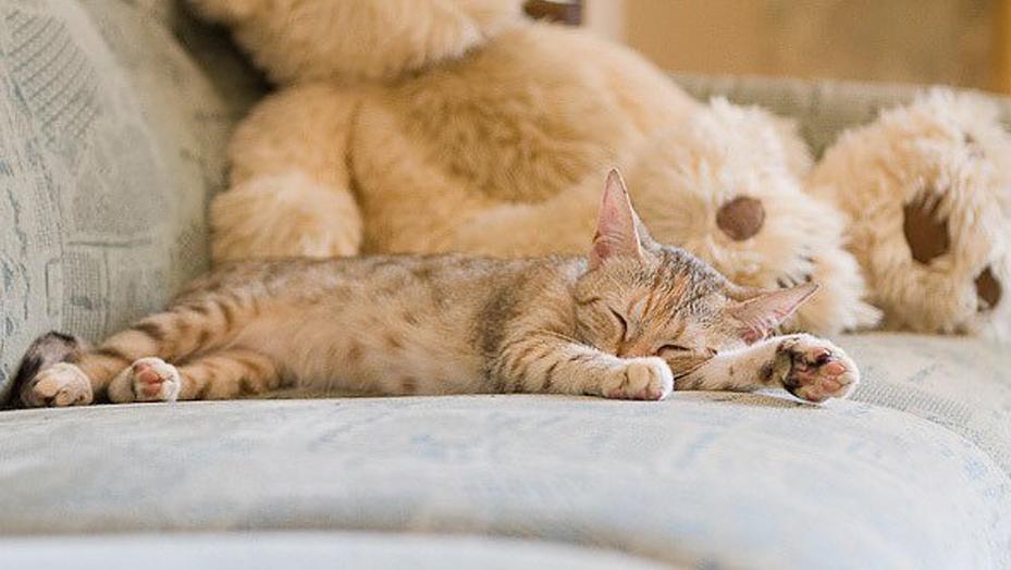 Cucciolo di gatto che dorme