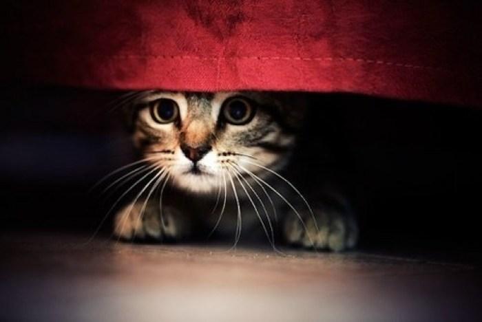 Cucciolo di gatto spaventato