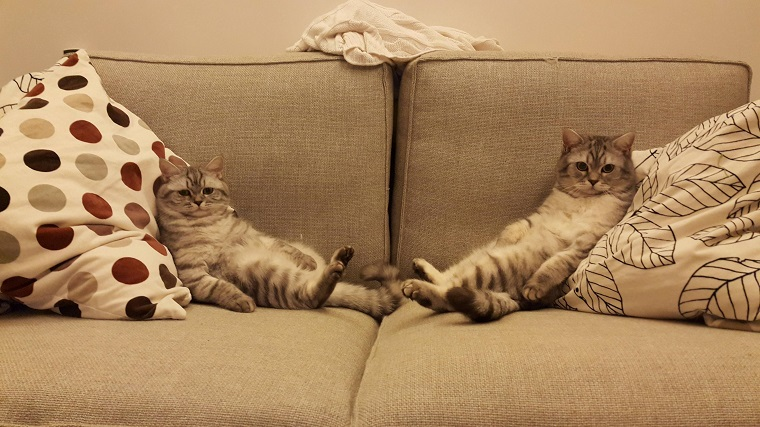 Due gatti sdraiati su un divano