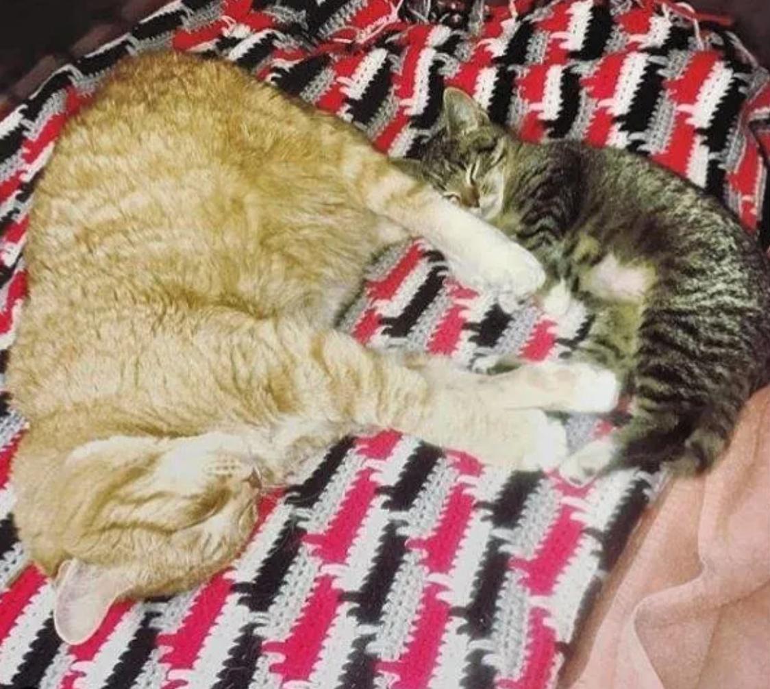 Due gatti che dormono