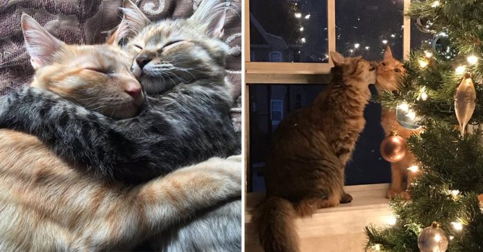 Due gatti che si vogliono bene