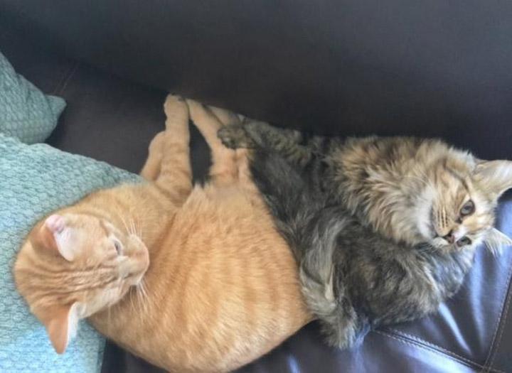 Due gatti sdraiati vicini