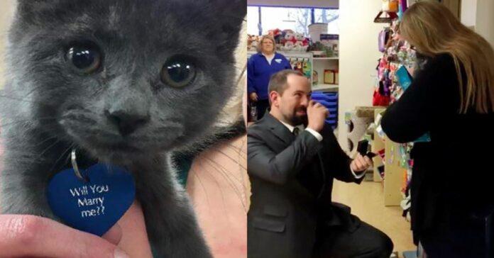 gattino-grigio-e-proposta-di-matrimonio