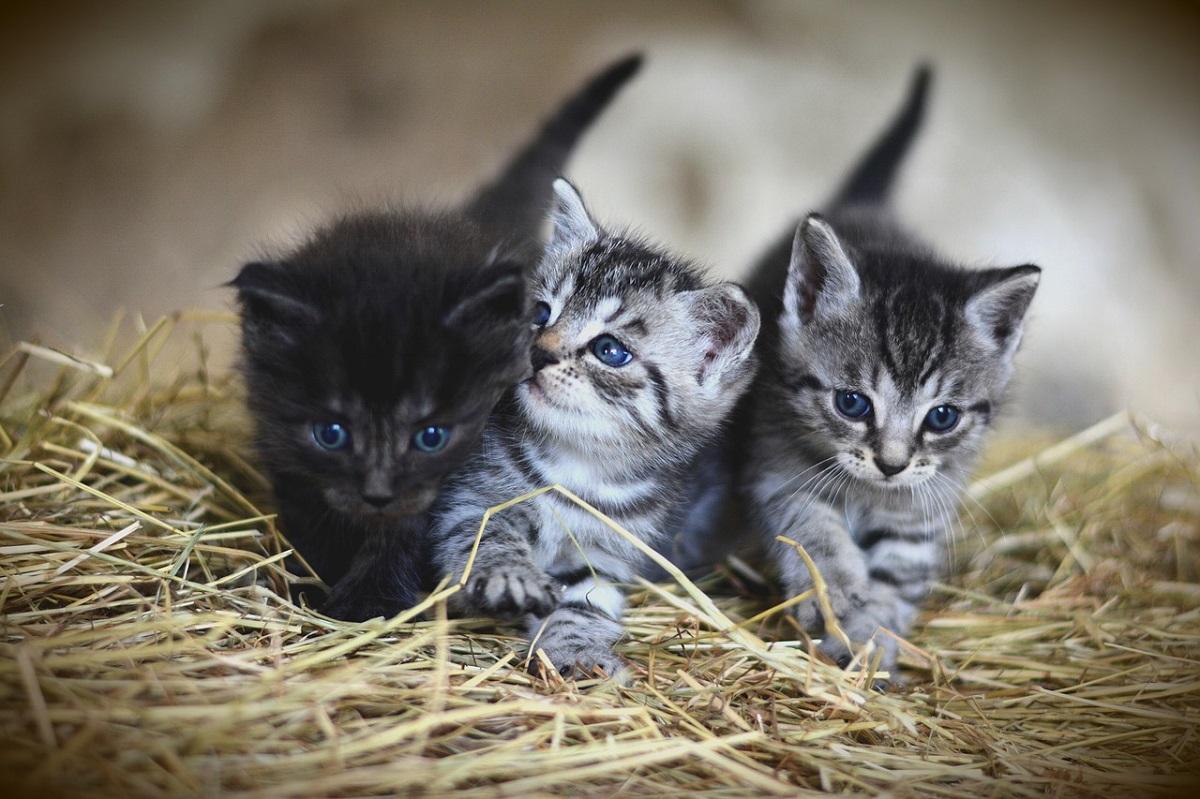3 gattini su paglia