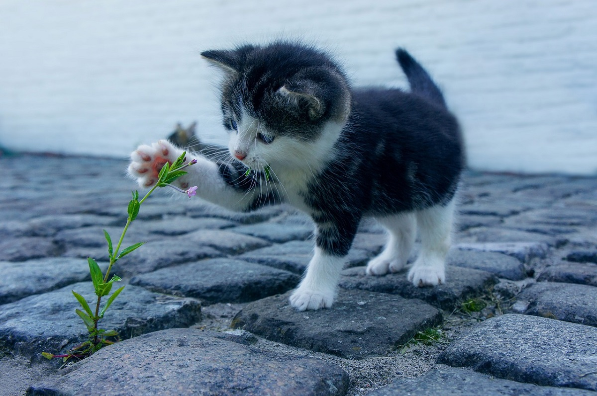 gattino afferra fiore