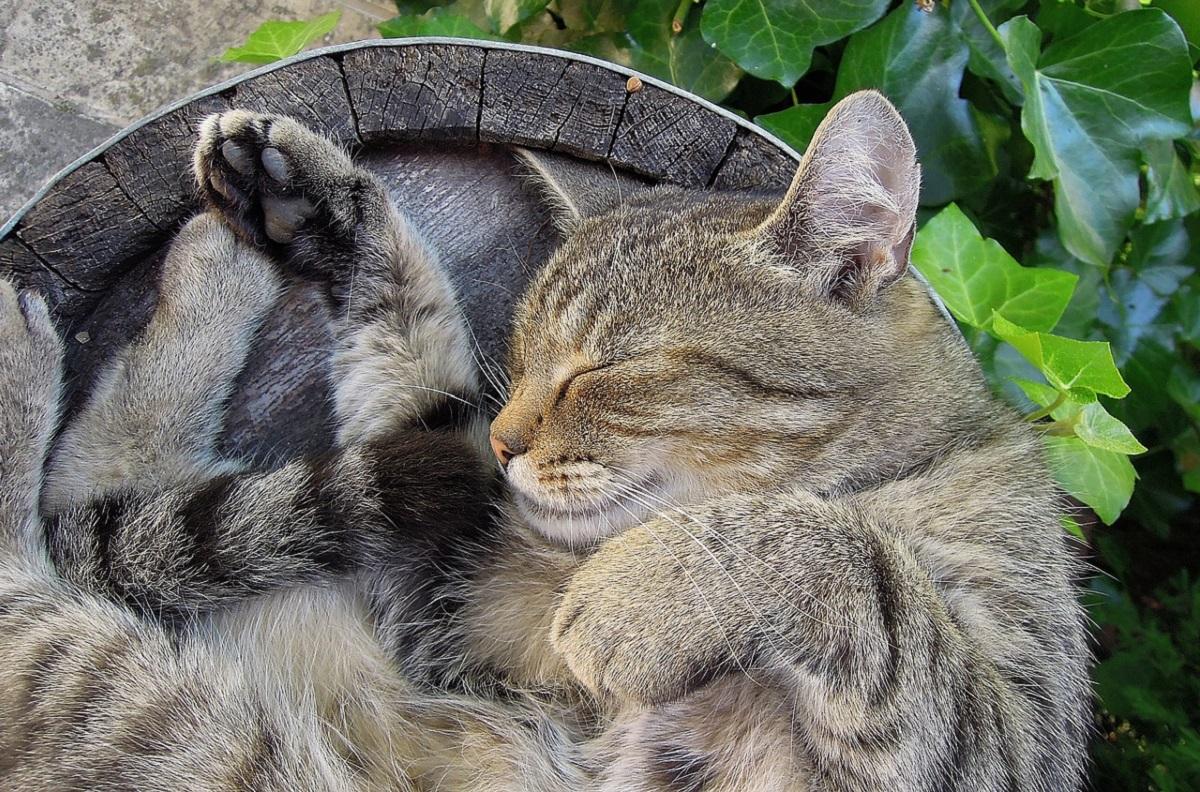 gatto dorme su botte
