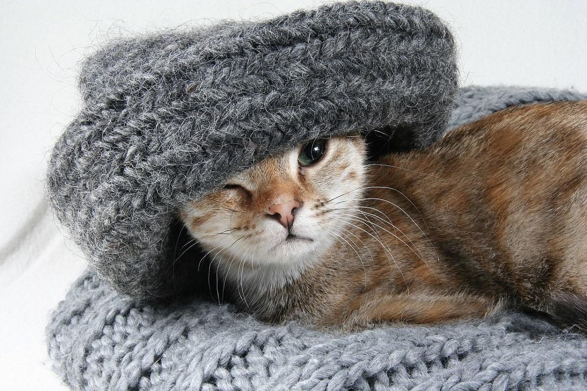 gatto con sciarpa di lana