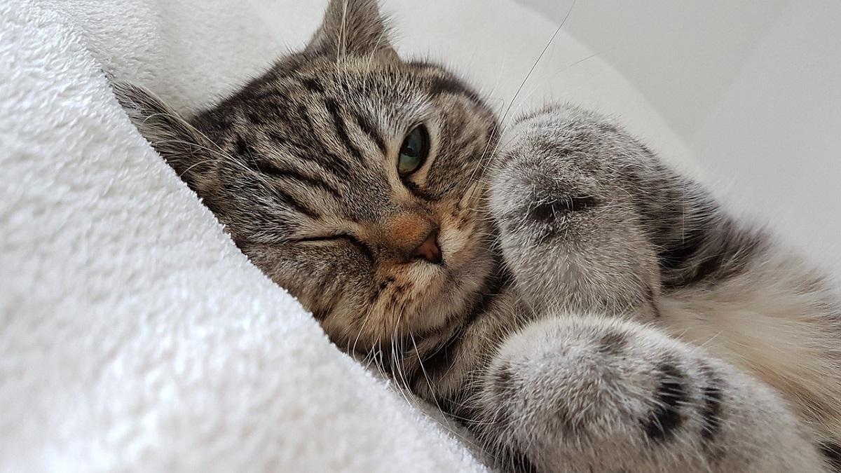 gatto con un occhio aperto e uno chiuso
