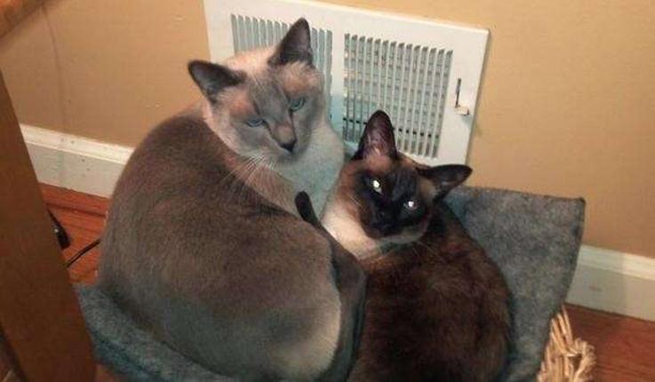 Gatti davanti all'aria condizionata