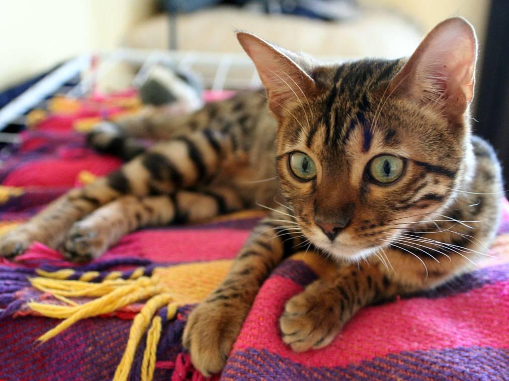Gatti su un letto