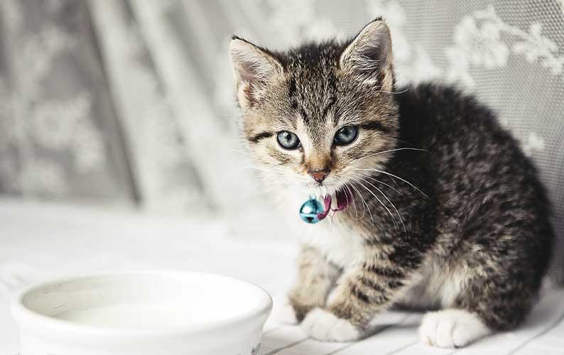 Gattino che beve