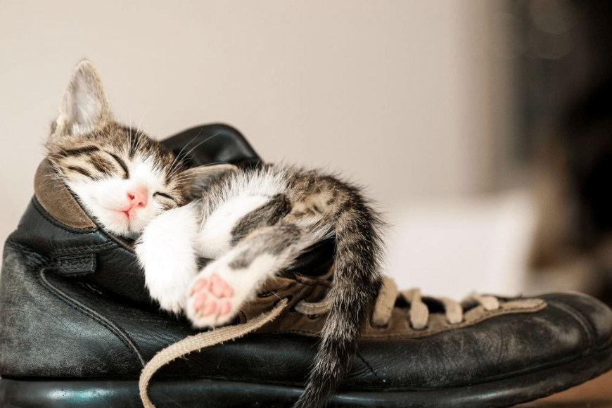 Gattino che dorme dentro ad una scarpa