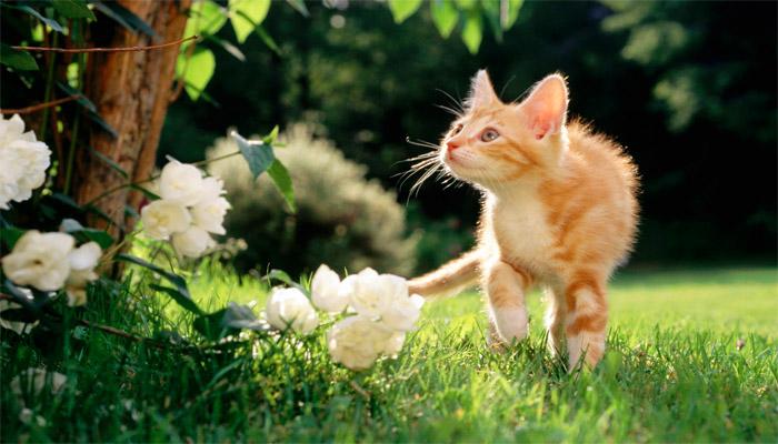 Gattino che esplora