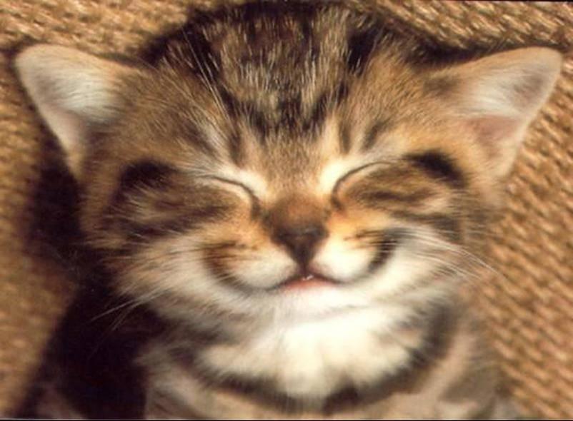 Gattino che sorride