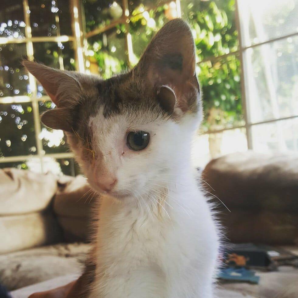 Gattino con 4 orecchie e un occhio solo